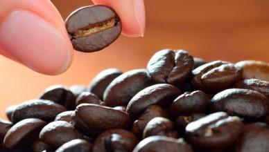 Componentes del sabor del café - sabor, aroma, tueste del café