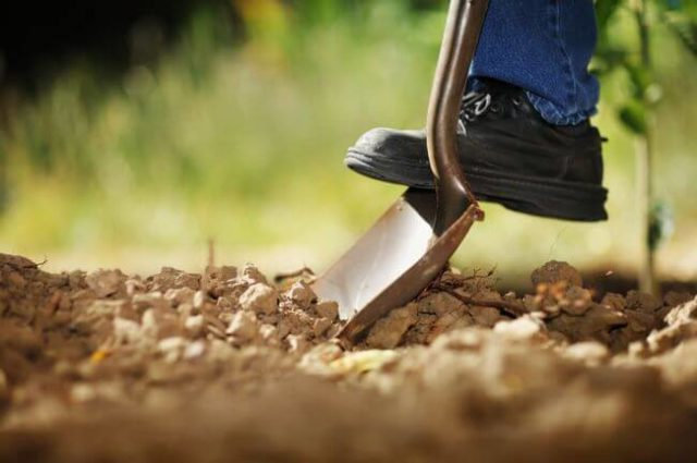 muestra, suelos, muestreo, análisis